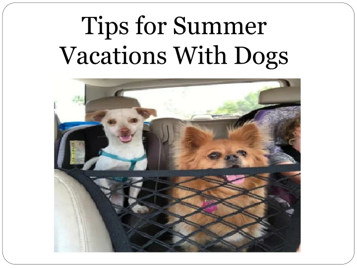 tips for summer vacations with dogs n.