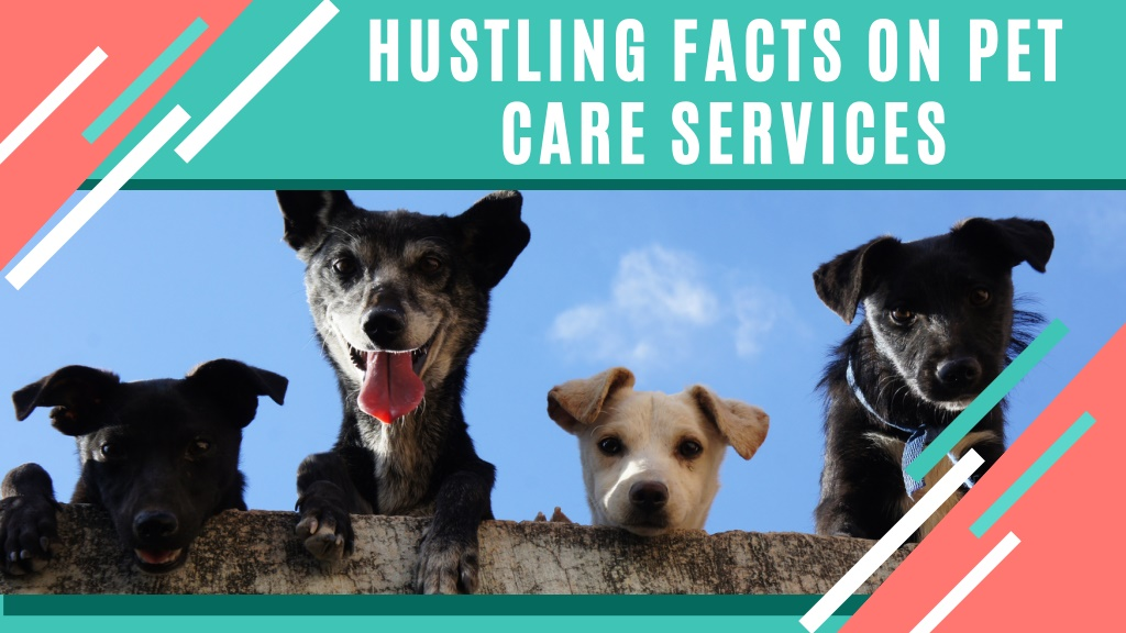 Hiring a Pet Care Professional