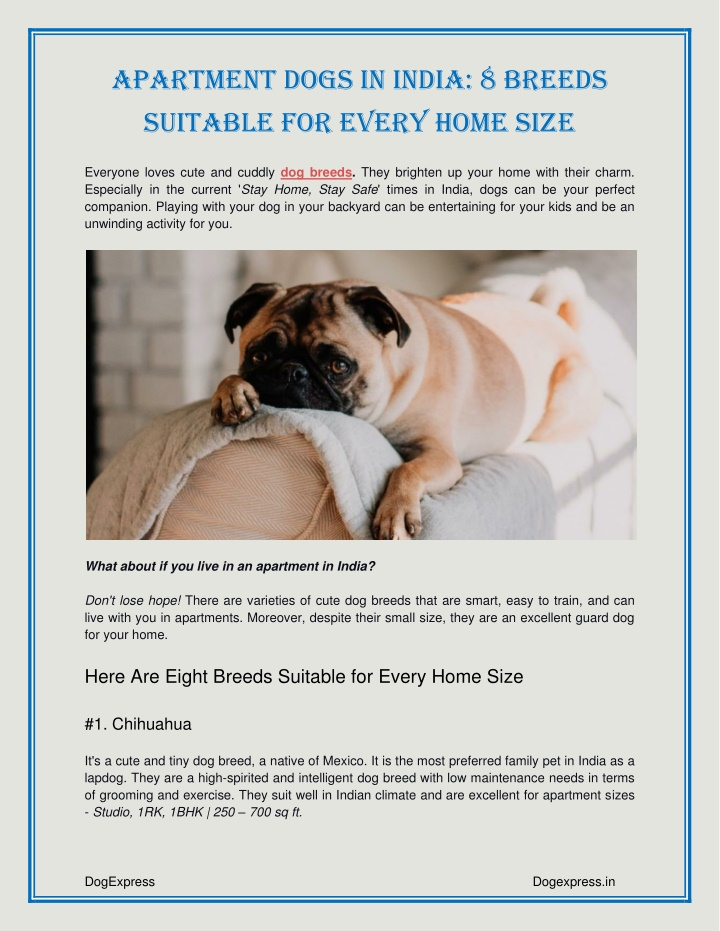 Apartment Dogs in India: 8 Breeds For Every Home Size