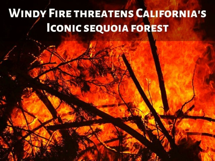 windy fire threatens california s iconic sequoia forest n.