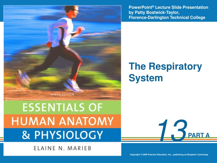 the respiratory system n.
