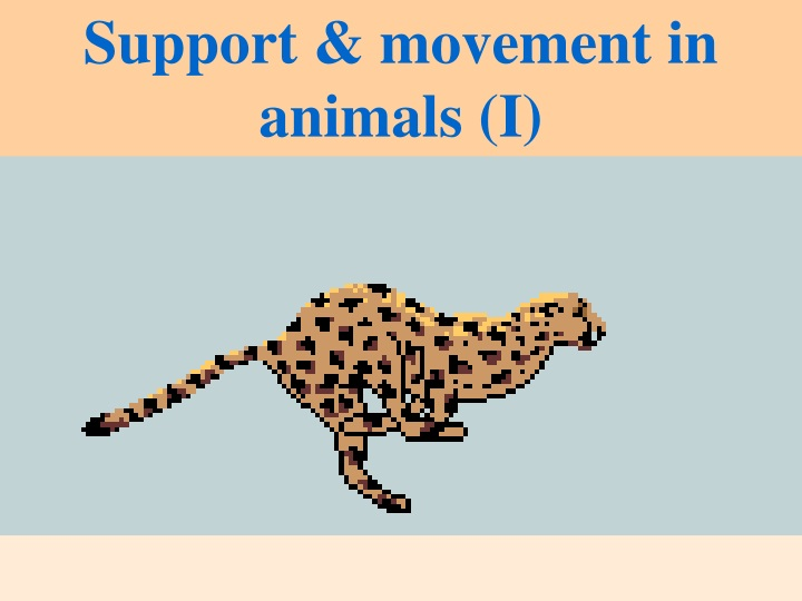 support movement in animals i n.