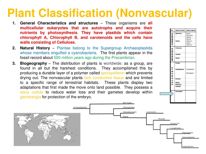 plant classification nonvascular n.