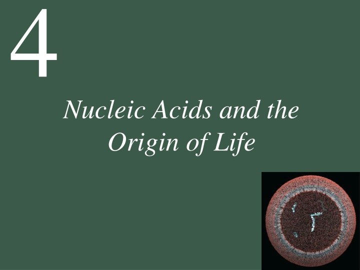 nucleic acids and the origin of life n.