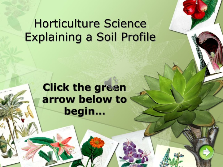 horticulture science explaining a soil profile n.