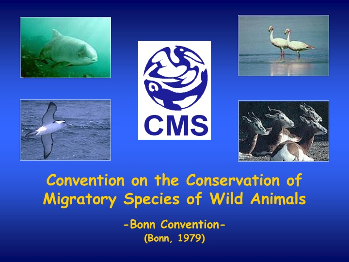 convention on the conservation of migratory n.