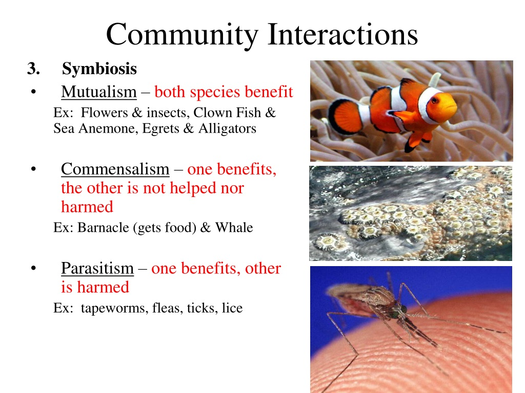 PPT - Chapter 3: The Biosphere PowerPoint Presentation ...