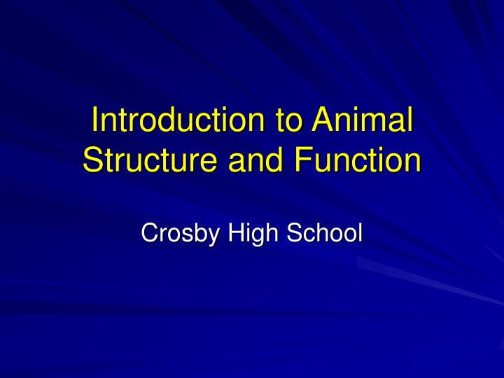introduction to animal structure and function n.