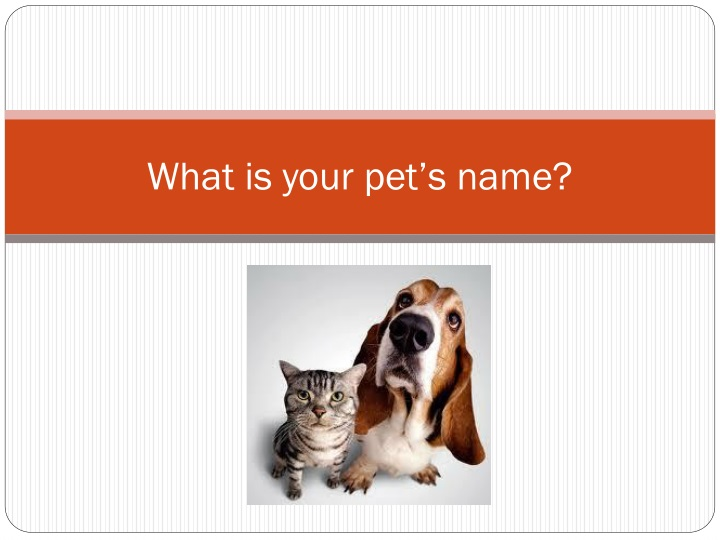 what is your pet s name n.