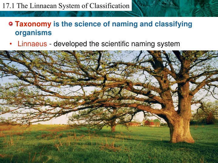 taxonomy is the science of naming and classifying organisms n.