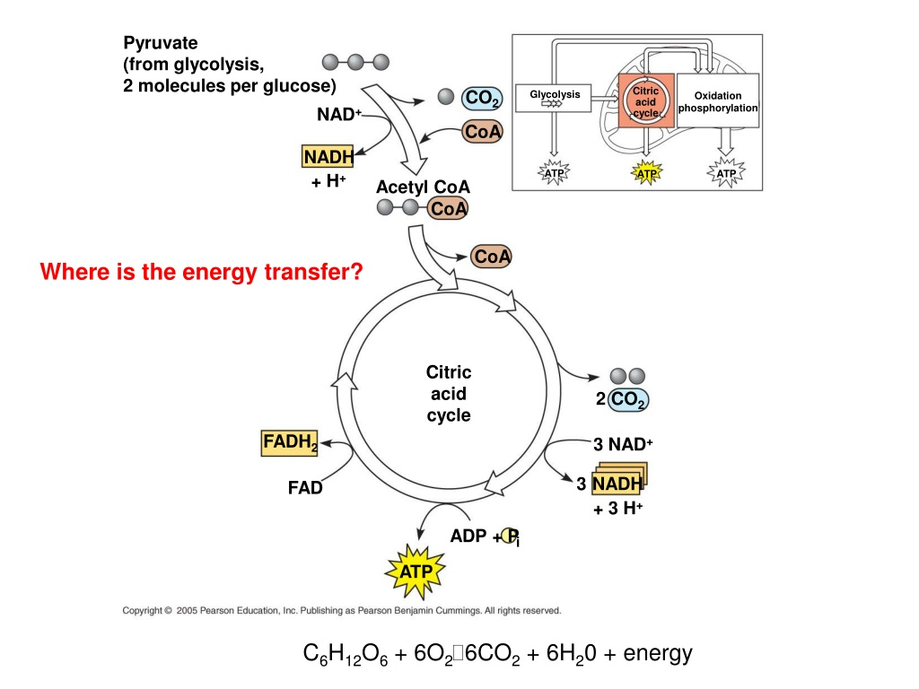PPT - 1st Law of Thermodynamics The energy of the universe ...