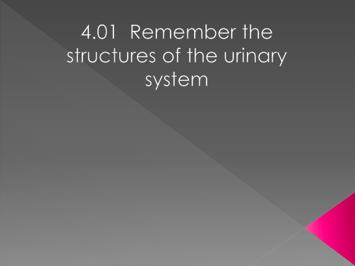 4 01 remember the structures of the urinary system n.