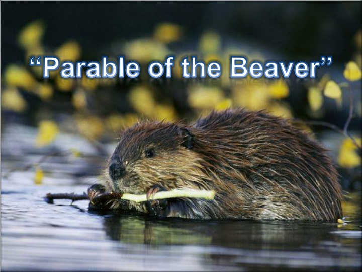 parable of the beaver n.