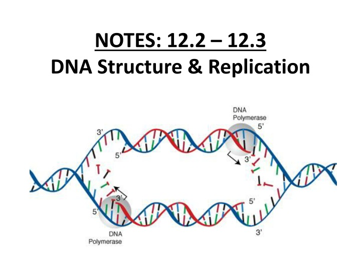 notes 12 2 12 3 dna structure replication n.