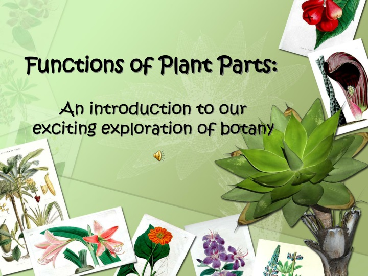 functions of plant parts n.