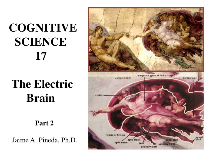 cognitive science 17 the electric brain part n.