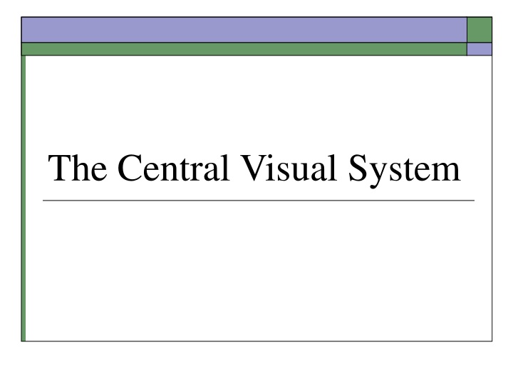 the central visual system n.