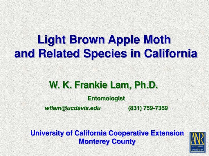 light brown apple moth and related species n.