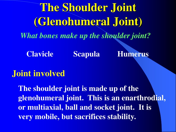the shoulder joint glenohumeral joint n.