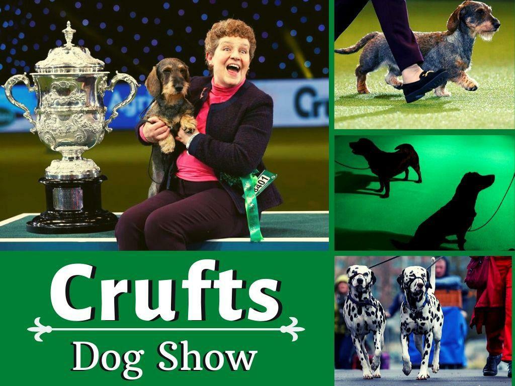 crufts dog show l.