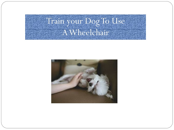 train your dog to use a wheelchair n.