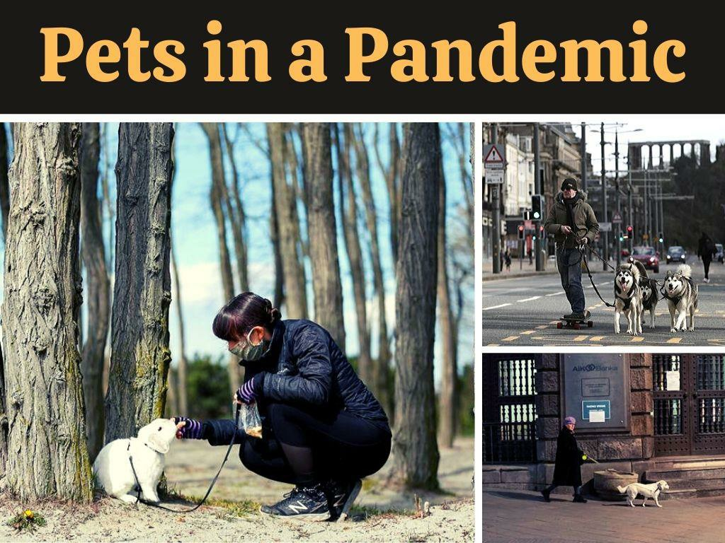 pets in a pandemic l.