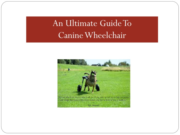 an ultimate guide to canine wheelchair n.